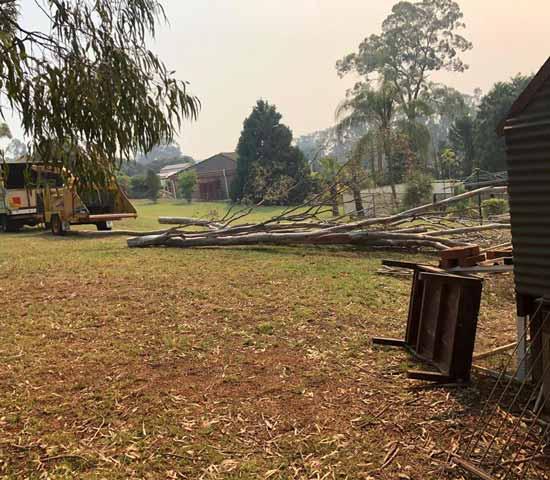 tree services Australia