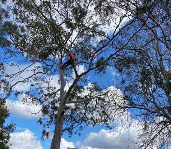 qualified arborists